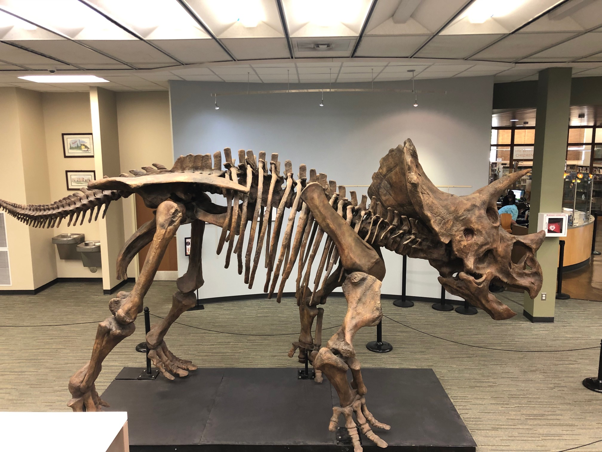 Public Library Spotlight: There's a Dinosaur in the Library